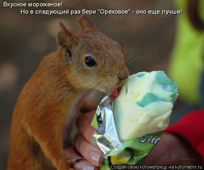 """Котоматрица: Но в следующий раз бери """"Ореховое"""" - оно еще лучше! Вкусное мороженое!"""