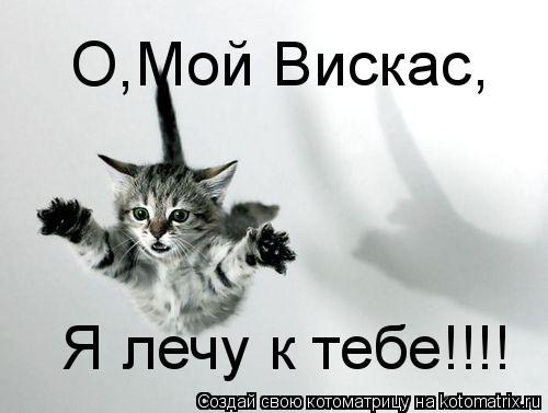 Котоматрица: О Мой Вискас Я лечу к тебе!!!! , ,