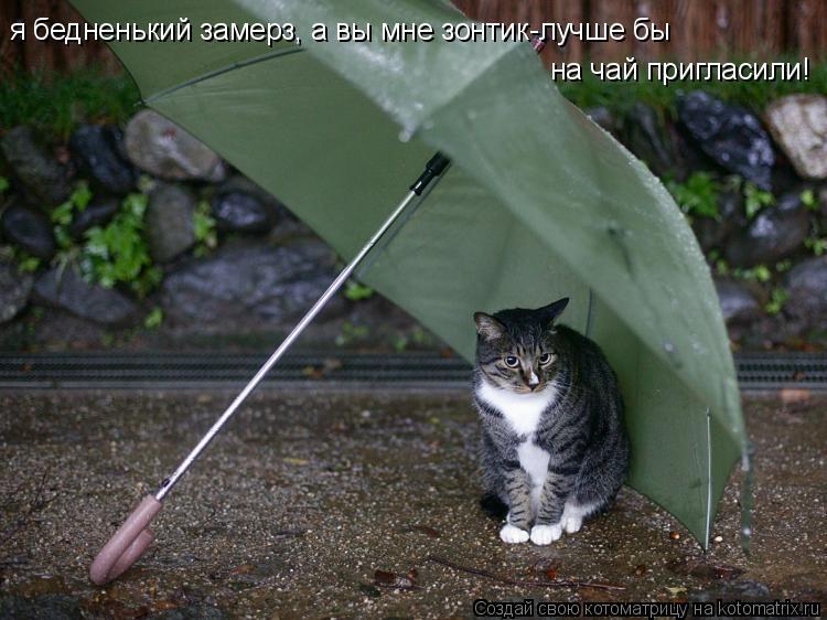 Котоматрица: я бедненький замерз, а вы мне зонтик-лучше бы я бедненький замерз, а вы мне зонтик-лучше бы на чай пригласили!