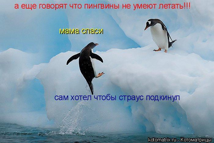 Котоматрица: а еще говорят что пингвины не умеют летать!!! мама спаси сам хотел чтобы страус подкинул