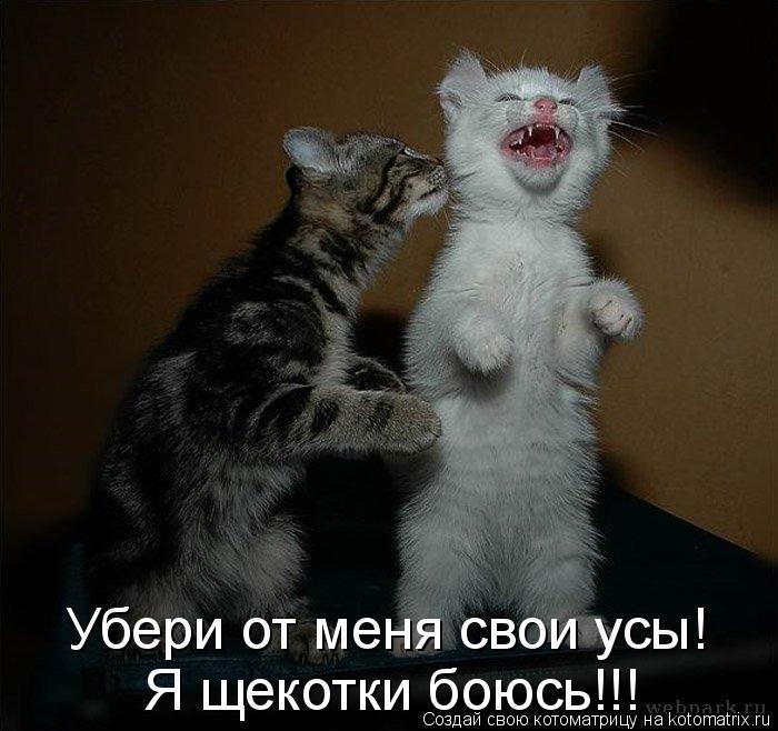 Котоматрица: Убери от меня свои усы!  Я щекотки боюсь!!!