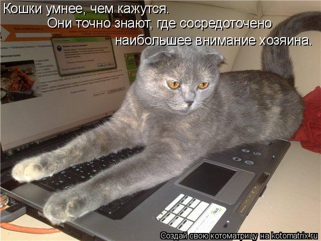Котоматрица: Кошки умнее, чем кажутся.  Они точно знают, где сосредоточено  наибольшее внимание хозяина.