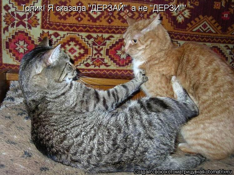 "Котоматрица: Толик! Я сказала ""ДЕРЗАЙ"", а не ""ДЕРЗИ"""""