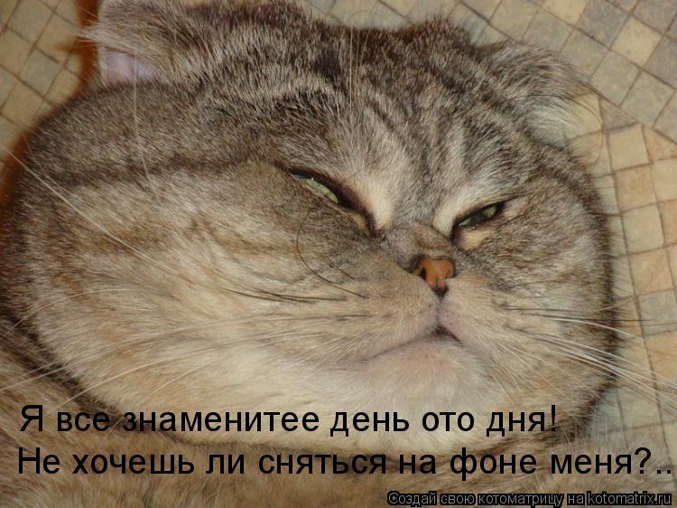 Котоматрица: Я все знаменитее день ото дня! Не хочешь ли сняться на фоне меня?..