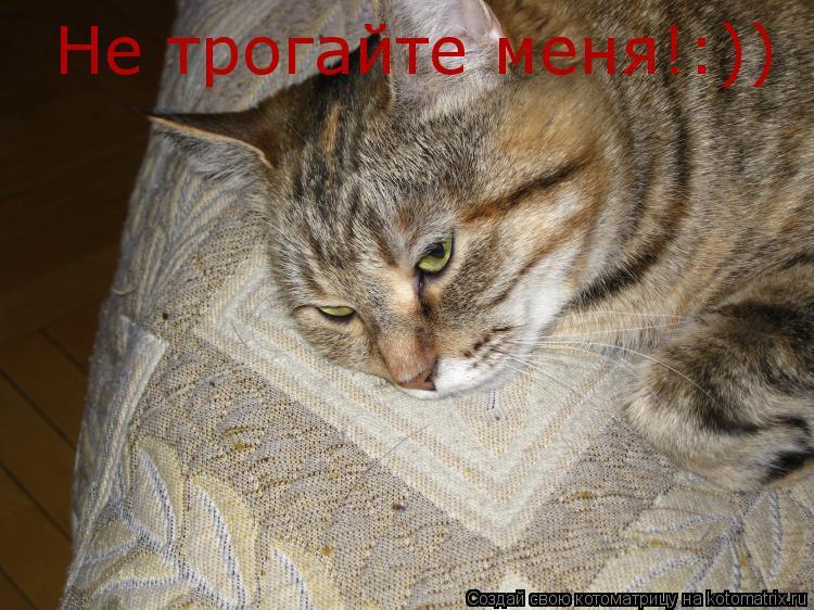 Котоматрица: Не трогайте меня!:))