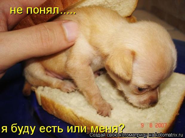 Котоматрица: не понял..... я буду есть или меня?