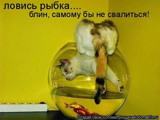 Котоматрица: ловись рыбка.... блин, самому бы не свалиться!