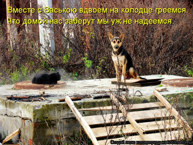 Котоматрица: Вместе с Ваською вдвоем на колодце греемся. Что домой нас заберут мы уж не надеемся.