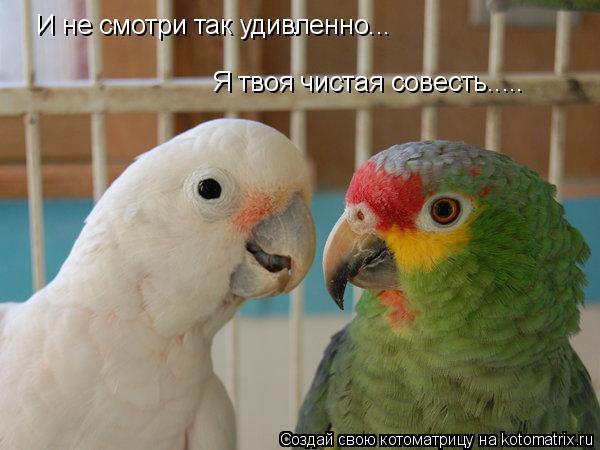 Котоматрица: И не смотри так удивленно... Я твоя чистая совесть.....