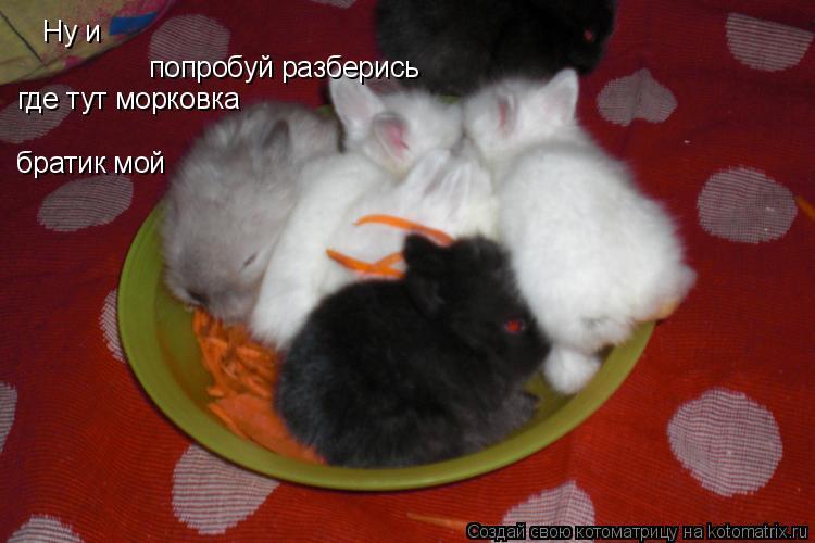 Котоматрица: Ну и попробуй разберись где тут морковка братик мой