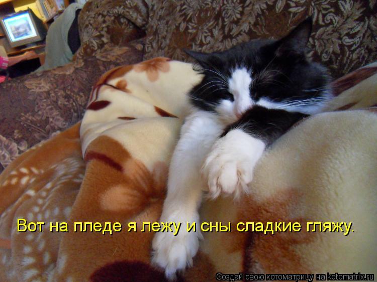 Котоматрица: Вот на пледе я лежу и сны сладкие гляжу.
