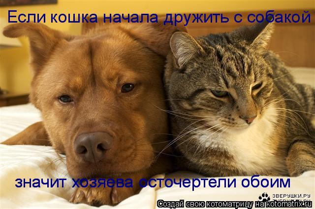 Котоматрица: Если кошка начала дружить с собакой значит хозяева осточертели обоим значит хозяева осточертели обоим