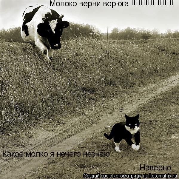 Котоматрица: Молоко верни ворюга !!!!!!!!!!!!!!!!!! Какое молко я нечего незнаю  Наверно