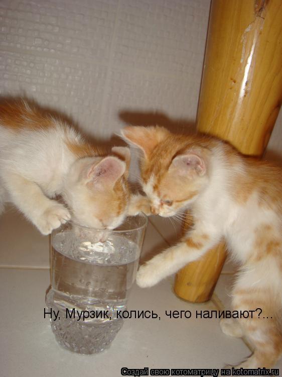 Котоматрица: Ну, Мурзик, колись, Ну, Мурзик, колись, чего наливают?...