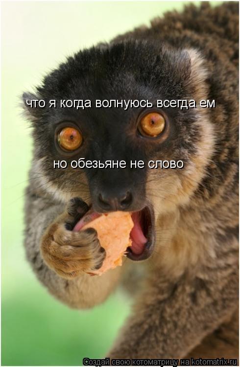 Котоматрица: что я когда волнуюсь всегда ем но обезьяне не слово