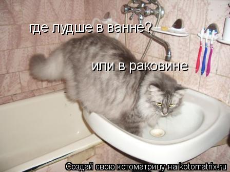 Котоматрица: где лудше в ванне? или в раковине