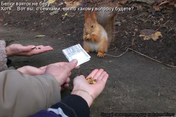 Котоматрица: Белки взяток не берут! Хотя... Вот вы, с семками, вы по какому вопросу будете?
