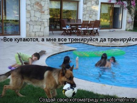 Котоматрица: -Все купаются, а мне все тренируйся да тренируйся...