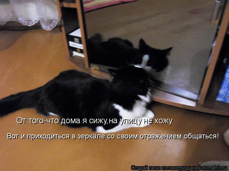 Котоматрица: От того-что дома я сижу,на улицу не хожу. Вот и приходиться в зеркале со своим отражением общаться!