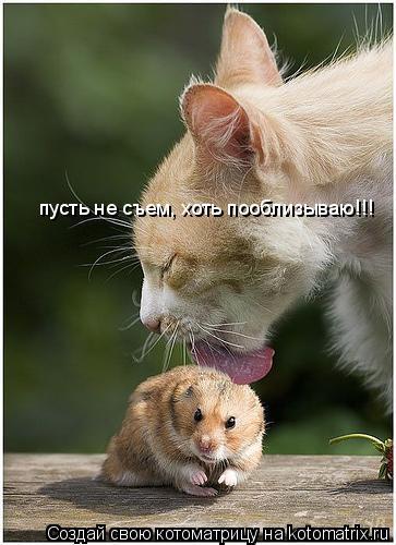 Котоматрица: пусть не съем, хоть пооблизываю!!!