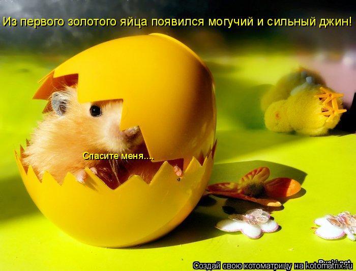 Котоматрица: Из первого золотого яйца появился могучий и сильный джин! Спасите меня....