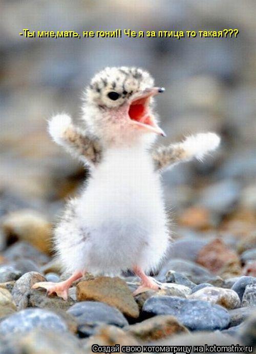 Котоматрица: -Ты мне,мать, не гони!! Че я за птица то такая???