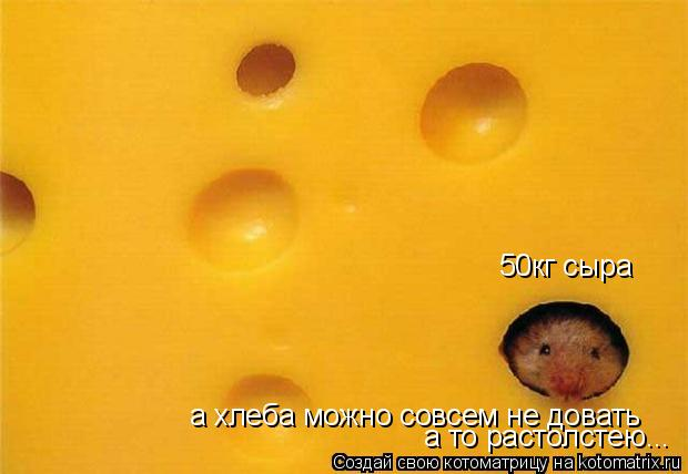 Котоматрица: 50кг сыра а хлеба можно совсем не довать а то растолстею...
