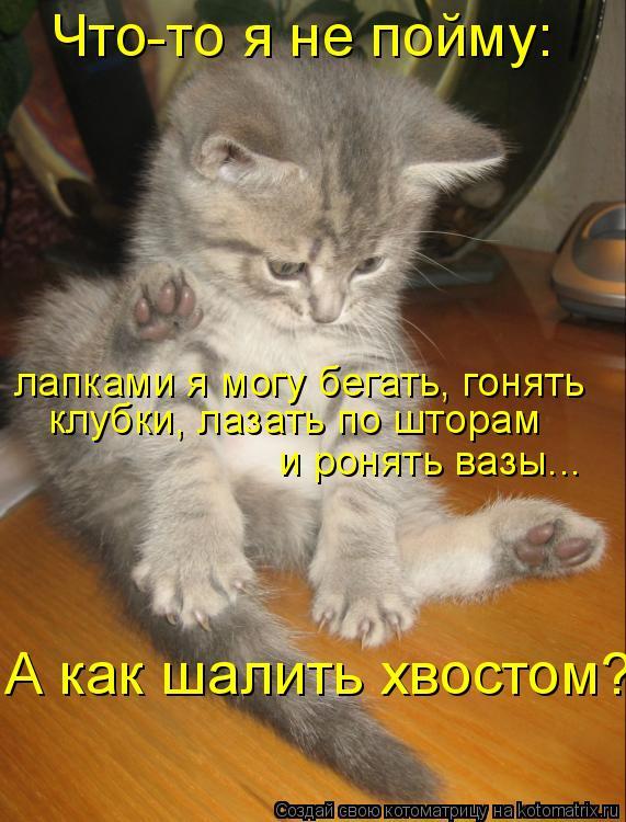 Котоматрица: Что-то я не пойму: лапками я могу бегать, гонять клубки, лазать по шторам и ронять вазы... А как шалить хвостом?