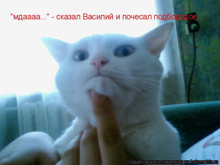 "Котоматрица: ""мдаааа..."" - сказал Василий и почесал подбородок..."