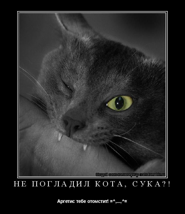 Котоматрица: Не погладил кота, сука?! Аргетис тебе отомстит! =^,...,^=