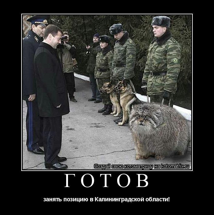 Котоматрица: ГОТОВ занять позицию в Калининградской области!
