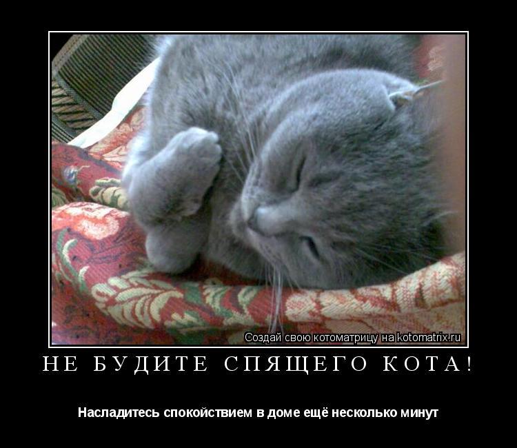 Котоматрица: Не будите спящего кота! Насладитесь спокойствием в доме ещё несколько минут
