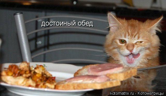Котоматрица: достоиный обед