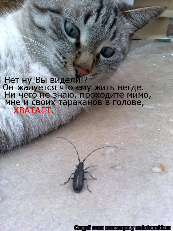 Котоматрица: Нет ну Вы видели!? Он жалуется что ему жить негде. Ни чего не знаю, проходите мимо,  мне и своих тараканов в голове, ХВАТАЕТ.