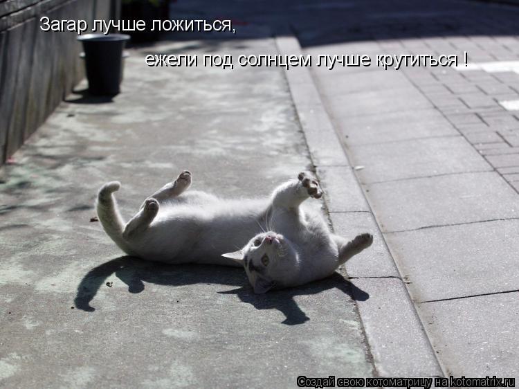 Котоматрица: Загар лучше ложиться,  ежели под солнцем лучше крутиться !