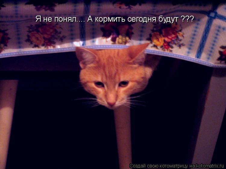 Котоматрица: Я не понял.... А кормить сегодня будут ??? Я не понял.... А кормить сегодня будут ???