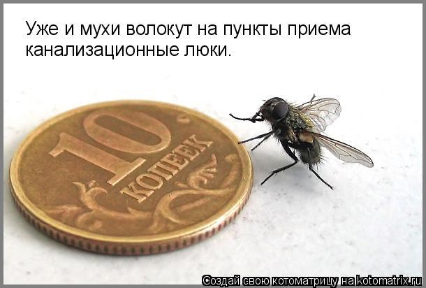 Котоматрица: Уже и мухи волокут на пункты приема канализационные люки.