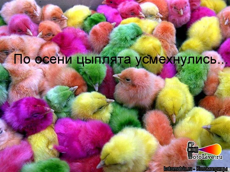 Котоматрица: По осени цыплята усмехнулись...