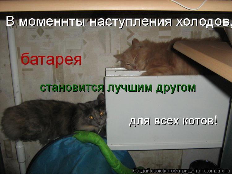 Котоматрица: батарея становится лучшим другом для всех котов! для всех котов!  В моменнты наступления холодов,