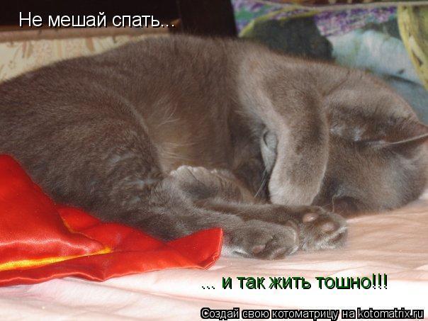 Котоматрица: Не мешай спать... ... и так жить тошно!!!