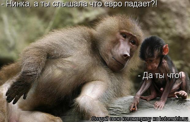 Котоматрица: - Нинка, а ты слышала что евро падает?! - Да ты что!