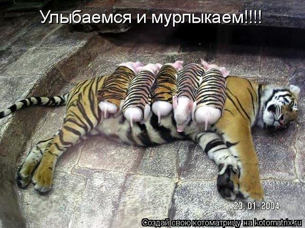 Котоматрица: Улыбаемся и мурлыкаем!!!!