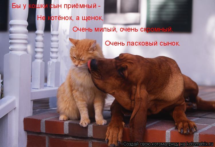 Котоматрица: Бы у кошки сын приёмный - Не котёнок, а щенок, Очень милый, очень скромный, Очень ласковый сынок.