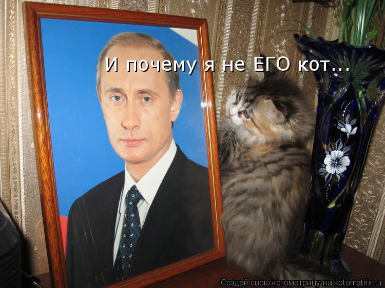 Котоматрица: И почему я не ЕГО кот...