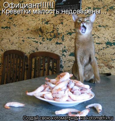 Котоматрица: Официант!!!!!! Креветки малость недоварены...