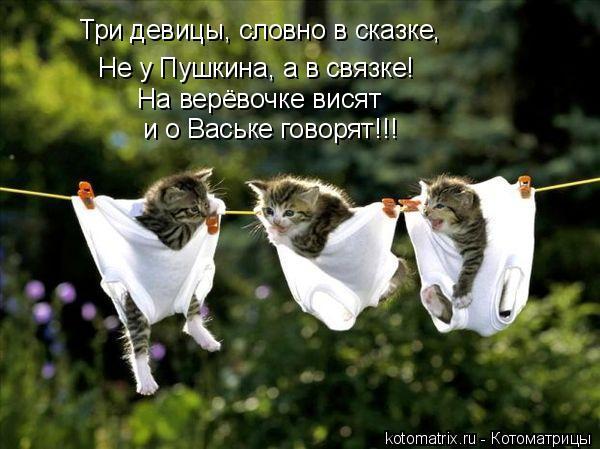 Котоматрица: Не у Пушкина, а в связке!   На верёвочке висят  и о Ваське говорят!!! Три девицы, словно в сказке,