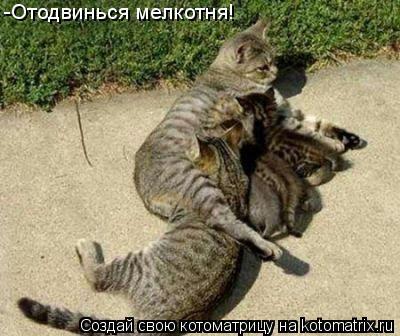 Котоматрица: -Отодвинься мелкотня!