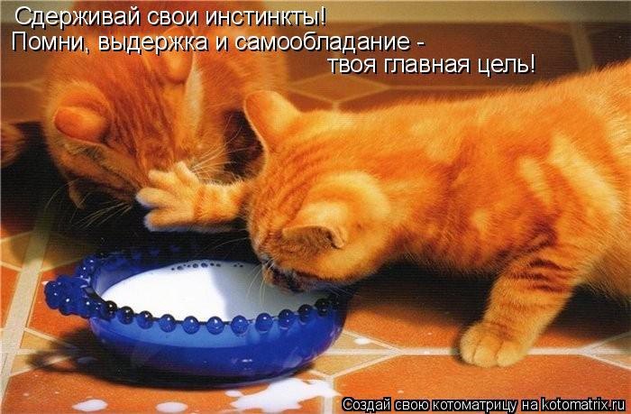Котоматрица: Сдерживай свои инстинкты! Помни, выдержка и самообладание -  твоя главная цель!