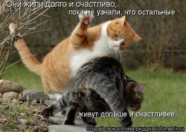 Котоматрица: Они жили долго и счастливо, пока не узнали, что остальные живут дольше и счастливее... пока не узнали, что остальные   живут дольше и счастлив