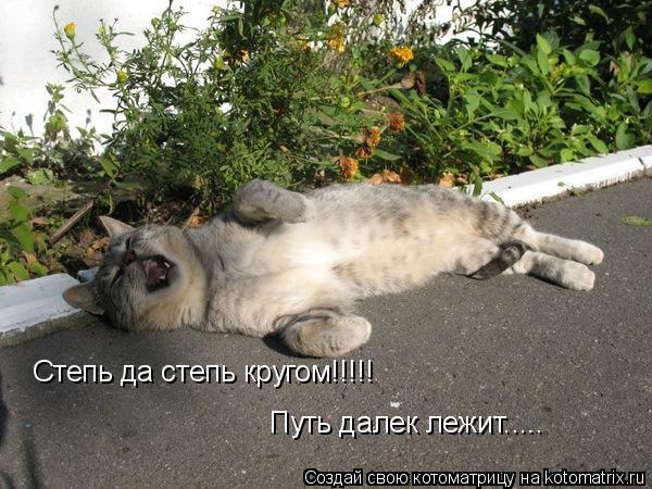 Котоматрица: Степь да степь кругом!!!!! Путь далек лежит.....